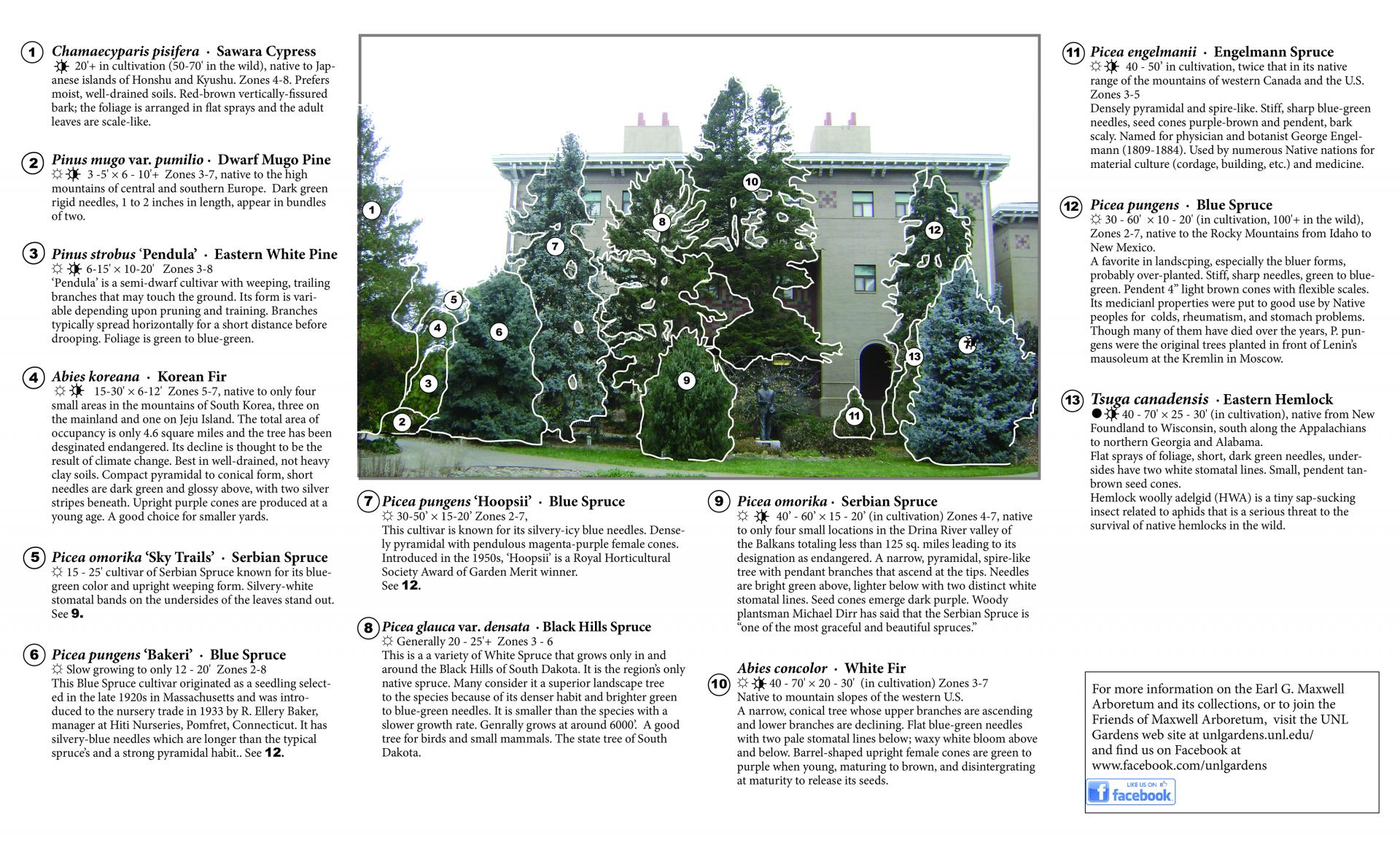 Yeutter conifer brochure page 2 jpg